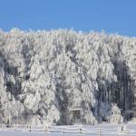 冬の間、メジロとかの鳥はどう過ごすの?