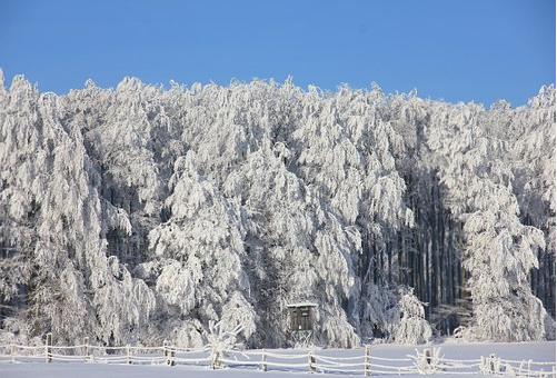 メジロ 冬 鳥