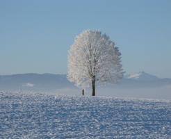 メジロ 鳥 冬 季節