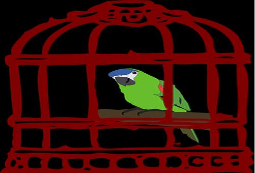 メジロ 鳥 ペット 値段