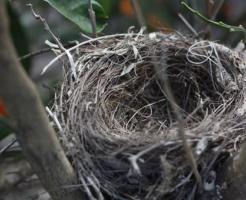 メジロ 巣 毎年 理由