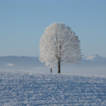 メジロという鳥は冬の季節どこにいるのか