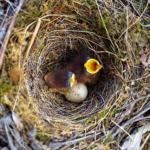 メジロの巣!卵が孵るまで